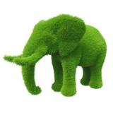 green elephant grass