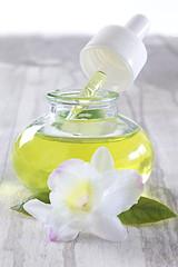 Orchidée - Fleur de beauté