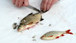 fisherman hand with knife clean bream and roach fish scale