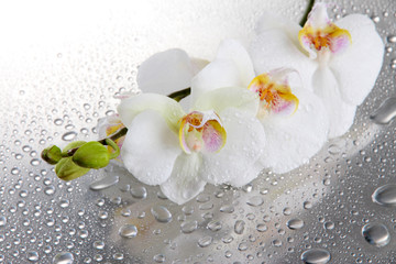 white beautiful orchids with drops