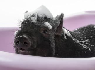 a cute little black piggy with a soap foam