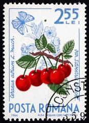 Postage stamp Romania 1964 Cherries, Cerasus Aurium