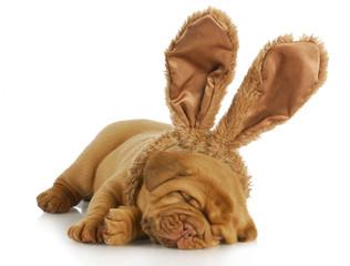 dog wearing bunny ears