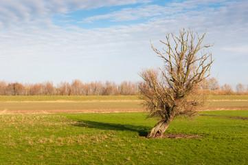 Solitary tree on grassland