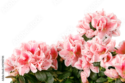 Big bouquet of pink colours. (Clipping path)