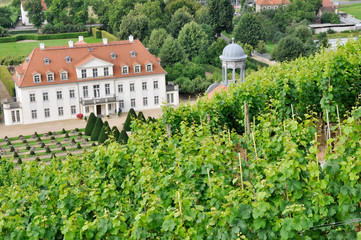 Radebeul vineyards, Saxony (Germany)