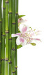 violet orchid and green bamboo grove on white background