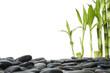 Spa still life –bamboo on black pebble