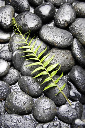 zielona-paproc-z-kropli-wody-na-kamyk