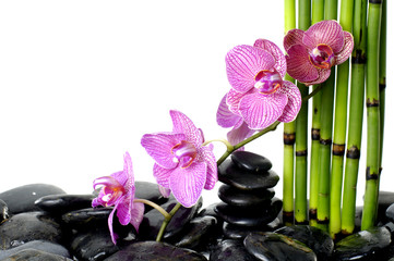 bamboo grove and branch orchid on pebble