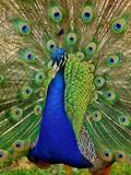 Fototapeta ptak - mężczyzna - Ptak