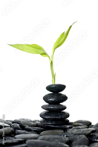 Fresh bamboo leaves with stacked of black stones