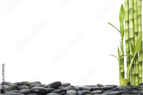 Fototapeten,hintergrund,bambus,schön,schönheit