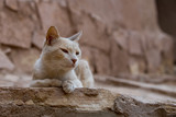 A cat relaxing in the ruins of Ait Benhaddou Maroc