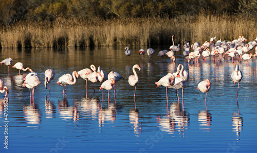 Fotobehang Flamingo flamants roses