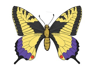 Hand drawn, sketch, vector illustration of swallowtail butterfly