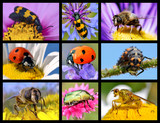 Nine photos mosaic of insects