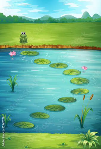 A frog and a lake