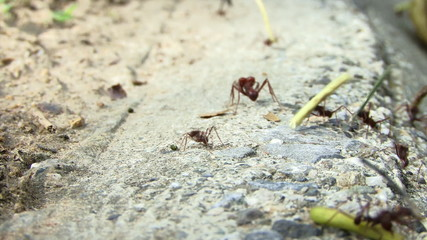 Ants Carrying Food