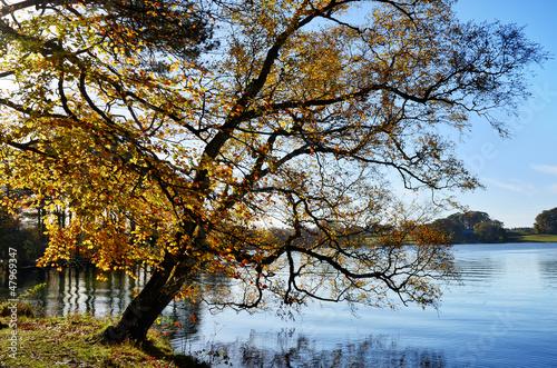 Talkin Tarn, Brampton, with overhanging tree
