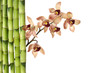 orchid and green bamboo grove with copy space