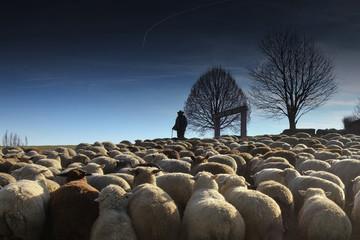 Der mit den Schafen spricht
