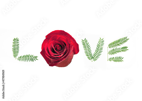 love is a rose