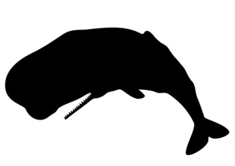Sperm whale silhouette (Physeter macrocephalus)