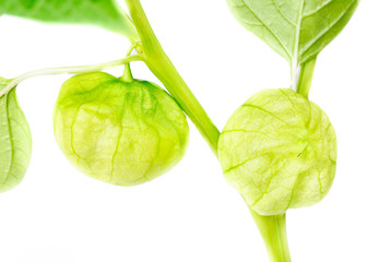 Physalis with bud,lantern  isolated on white background