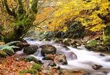 Otoño en el bosque de Redes, Asturias, España.