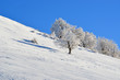 winter landscape slope snowy trees  white