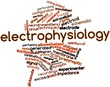 Word cloud for Electrophysiology