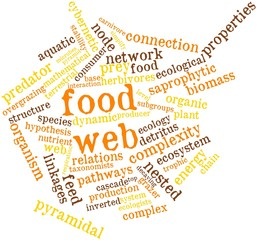 Word cloud for Food web