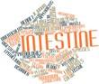 Постер, плакат: Word cloud for Intestine