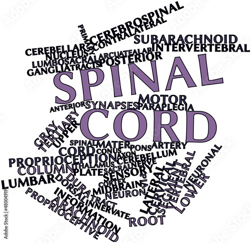 Word cloud for Spinal cord