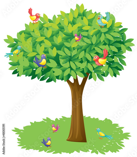 A tree and birds