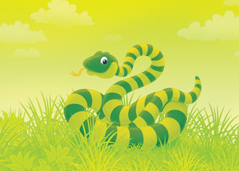 Green striped snake writhing in grass