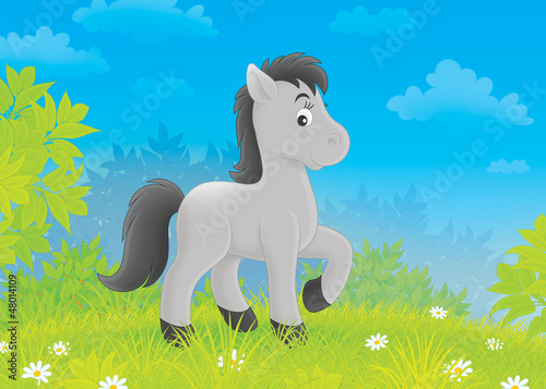 Spoed canvasdoek 2cm dik Pony Foal on a meadow
