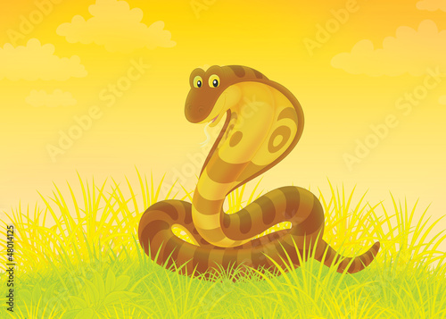 Big brown cobra writhing in grass