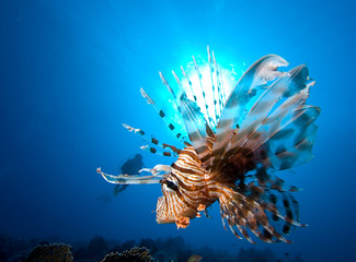 A diver lionfish and sun at the background