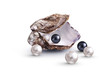 Huitre Perliere - 48021351