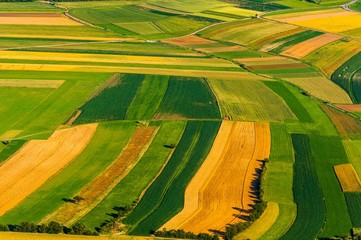 Big field ready to harvest