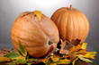 Two ripe orange pumpkins with yellow autumn leaves