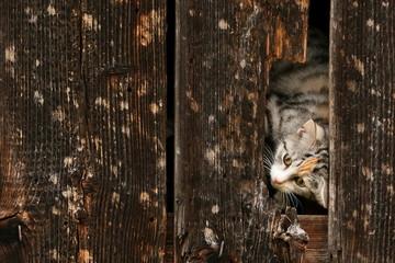 Katze im Unterschlupf