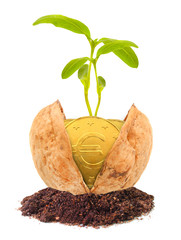 Money growth. Golden coins in nutshell. Saving concept.