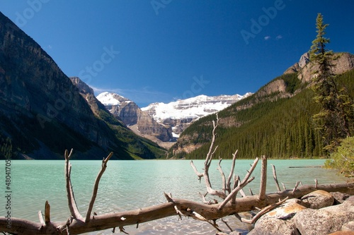 Dead Tree at Lake Louise