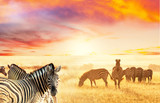 Fototapeta afryka - przygoda - Dziki Ssak