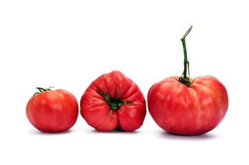 Natural  Tomatoes on white background