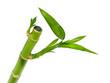 Fototapeten,hintergrund,bambus,schönheit,verzweigt