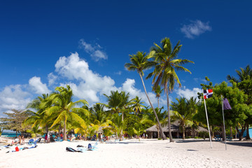 Palm trees on the tropical beach, Saona Island, Dominican Rep